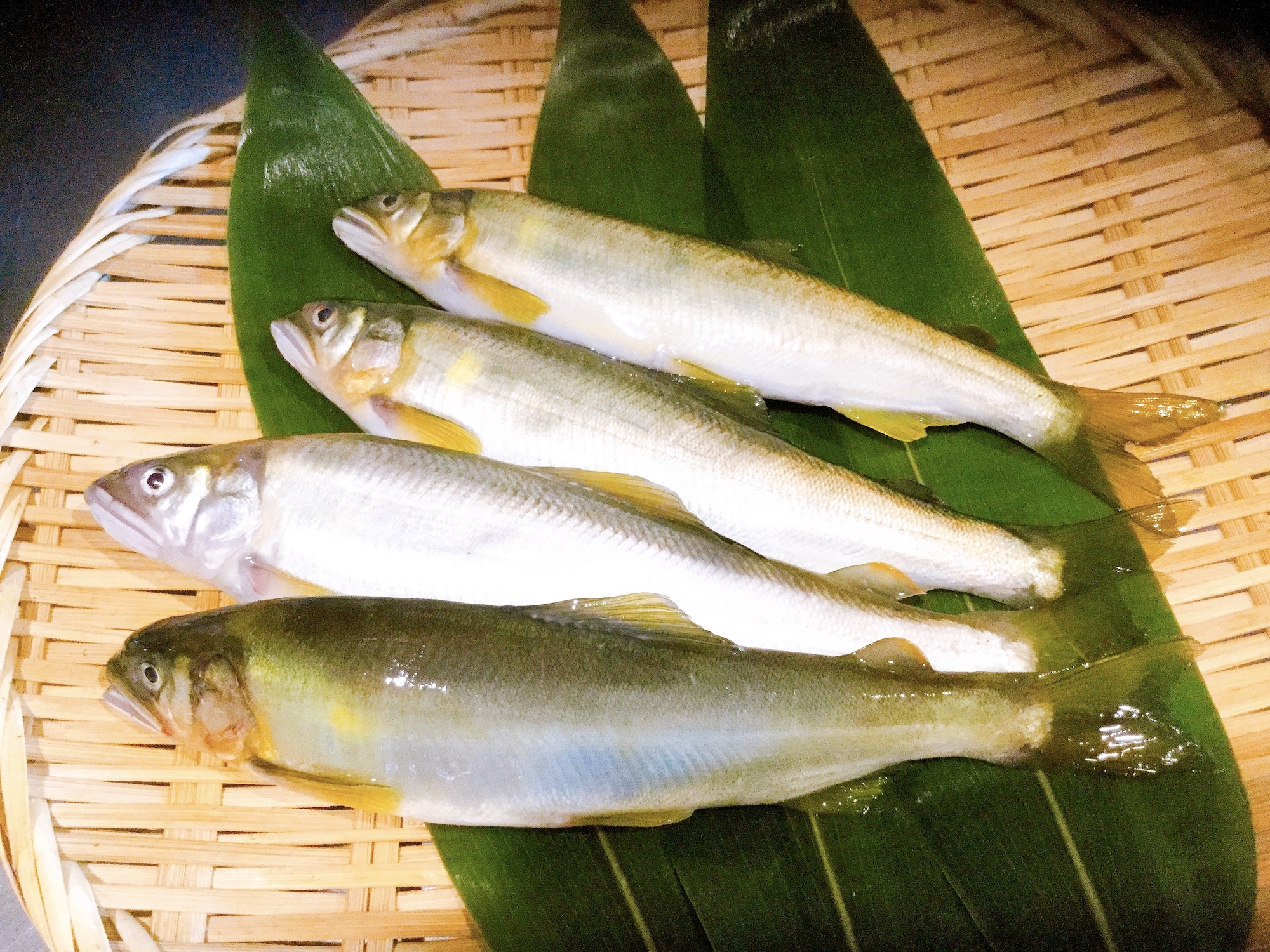 夏の魚、鮎のご紹介。